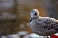 Uccello dalla riva del fiume Fotografie Stock Libere da Diritti