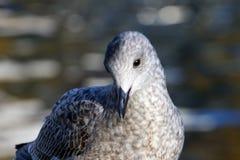 Uccello dalla riva del fiume Fotografia Stock