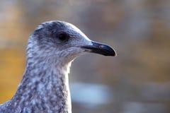 Uccello dalla riva del fiume Immagine Stock Libera da Diritti