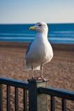 Uccello dalla spiaggia Immagini Stock