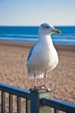 Uccello dalla spiaggia Immagini Stock Libere da Diritti