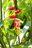 Uccello dei fiori di paradiso Immagine Stock