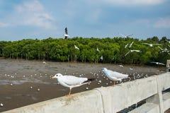 Uccello dei gabbiani al mare Bangpu Samutprakarn Tailandia fotografia stock