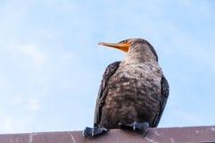 Uccello dei terreni paludosi immagine stock