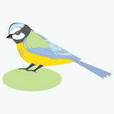 Uccello del capezzolo titmouse Illustrazione di vettore di un uccello del paro Fotografie Stock