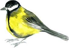 Uccello del disegno dell'acquerello Fotografie Stock Libere da Diritti
