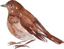 Uccello del disegno dell'acquerello Fotografia Stock