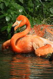 Uccello del fenicottero Immagine Stock Libera da Diritti