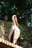 Uccello del fenicottero sul tetto Fotografia Stock