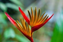 Uccello del fiore del paradiso Fotografia Stock Libera da Diritti