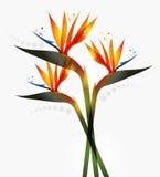 Uccello del fiore di paradiso illustrazione di stock