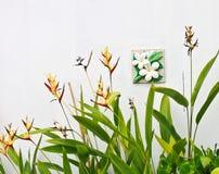Uccello del fiore di paradiso. Immagini Stock