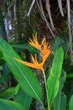 Uccello del fiore di paradiso Fotografie Stock Libere da Diritti