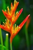 Uccello del fiore di paradiso e del fondo verde fotografie stock libere da diritti