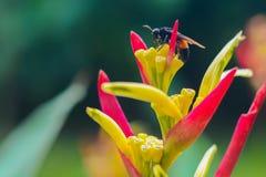 Uccello del fiore di paradiso (reginae di Strelitzia) Fotografia Stock