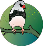 Uccello del fringillide di zebra Immagine Stock Libera da Diritti