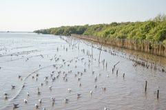 Uccello del gabbiano alla spiaggia dell'unità di elaborazione di colpo Fotografie Stock