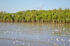 Uccello del gabbiano alla spiaggia dell'unità di elaborazione di colpo Fotografia Stock