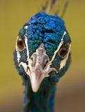 Uccello del giardino zoologico Fotografie Stock