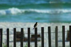 Uccello del golfo del Messico su un recinto fotografia stock