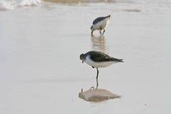 Uccello del martin pescatore sulla spiaggia Fotografie Stock