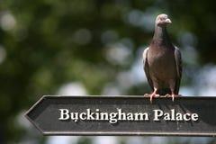 Uccello del palazzo Fotografia Stock Libera da Diritti