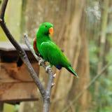 Uccello del pappagallo Immagini Stock Libere da Diritti