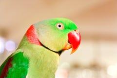 Uccello del pappagallo sul fondo della sfuocatura immagini stock libere da diritti
