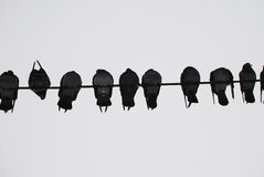 Uccello del piccione Fotografia Stock Libera da Diritti