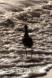 Uccello del Sandpiper in mare Fotografie Stock Libere da Diritti