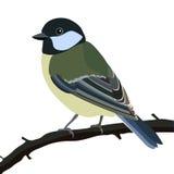 Uccello del Tit Fotografie Stock Libere da Diritti