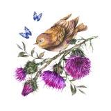 Uccello dell'acquerello su un ramo con il cardo selvatico, farfalle blu, illustrazione dei fiori selvaggi, erbe del prato illustrazione di stock