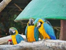 Uccello dell'ara Immagine Stock
