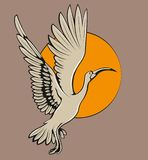 Uccello dell'ibis di volo Fotografia Stock
