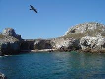 Uccello dell'isola Immagine Stock