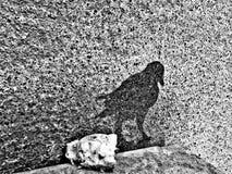 Uccello dell'ombra Fotografie Stock Libere da Diritti