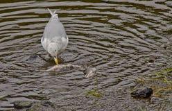 Uccello dell'organismo saprofago Fotografia Stock Libera da Diritti