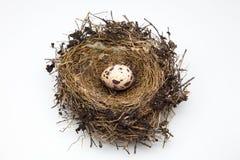 Uccello dell'uovo Immagine Stock