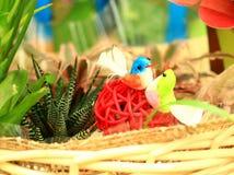 Uccello della bambola Fotografie Stock