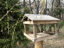 Uccello della foresta dell'alimentatore dell'uccello in primavera nell'aviario fotografia stock libera da diritti
