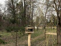 Uccello della foresta dell'alimentatore dell'uccello in primavera nell'aviario immagine stock libera da diritti