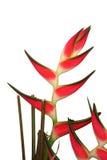 Uccello della pianta di paradiso Fotografie Stock