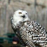 Uccello della preda Immagini Stock