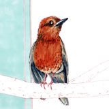 Uccello della primavera su fondo blu Fotografia Stock Libera da Diritti
