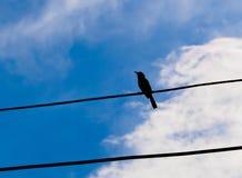 Uccello della siluetta Fotografie Stock Libere da Diritti
