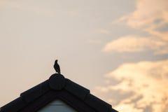 Uccello della siluetta sul tetto Immagini Stock Libere da Diritti