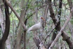 Uccello della spiaggia di Florida fotografia stock libera da diritti