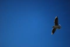 Uccello in dettaglio del cielo Fotografia Stock