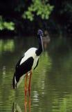 Uccello di acqua fotografie stock