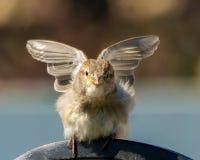 Uccello di angelo Fotografia Stock Libera da Diritti